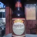 SA_Harvest